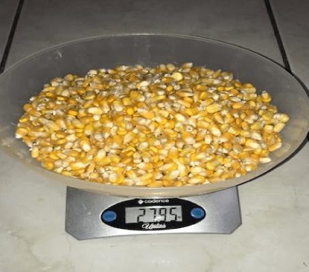 Página de Resultados Amazon Fertilizantes Milho Testemunha
