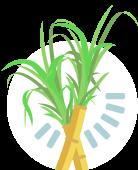 Amazon AgroSciences Fertilizantes Resultados Ícone Cana-de-Açúcar Padrão Amazon