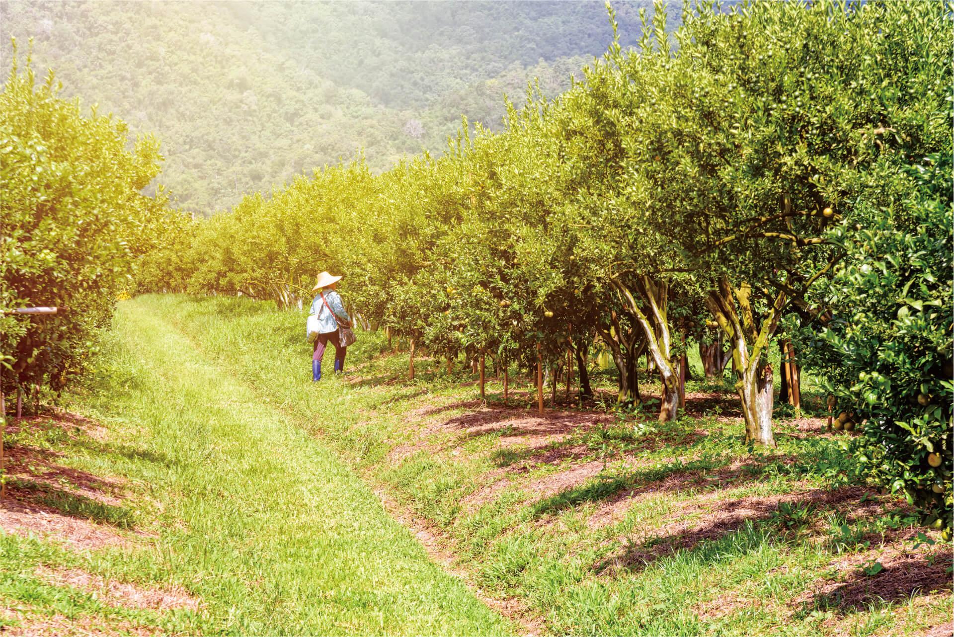 GRANBLACK-Fertilizante-Foliar-Organomineral-Premium-Imagem-de-Fundo-Laranjal.jpg