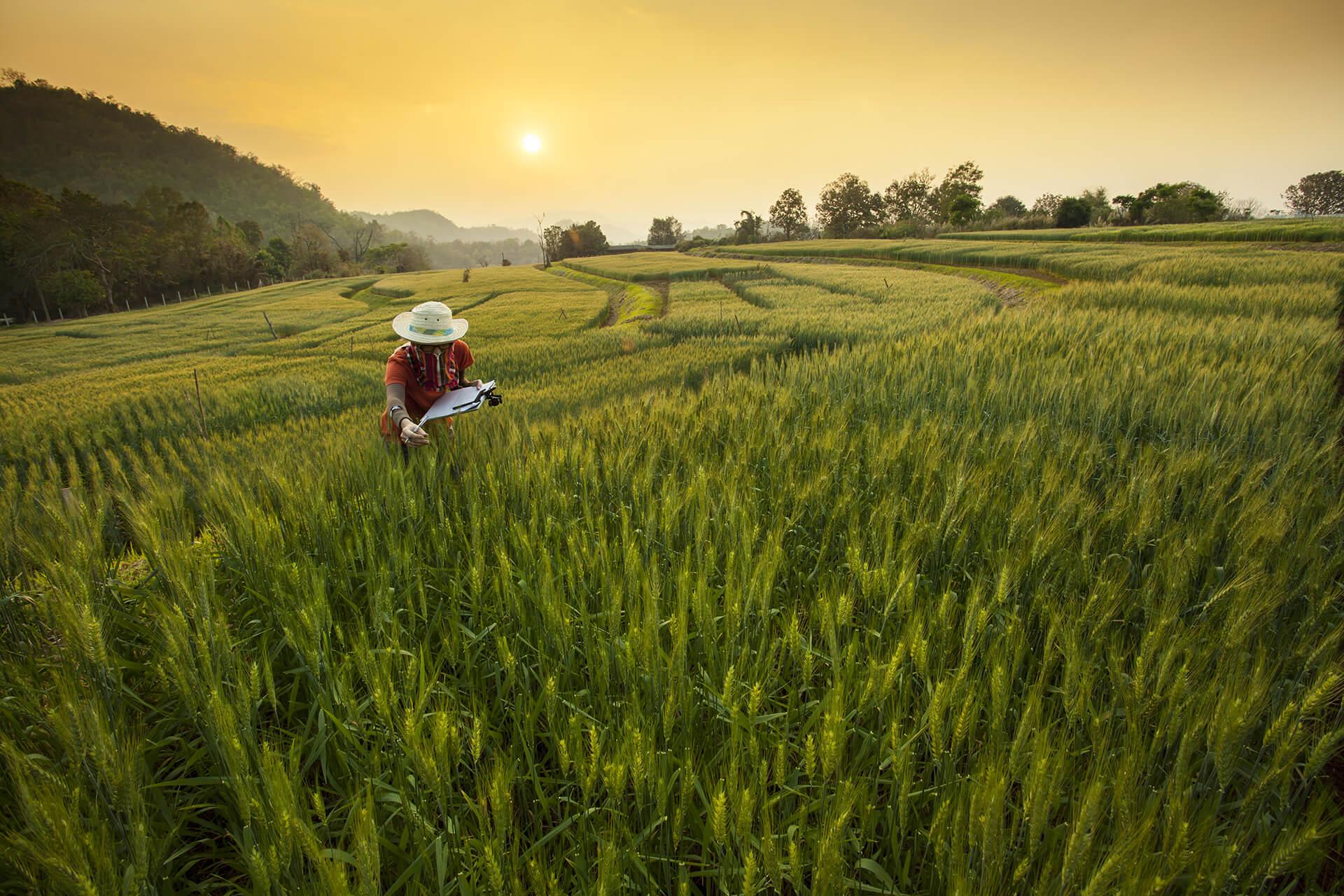 Amazon AgroSciences Fertilizantes Líquidos de Alto Desempenho Imagem de Fundo Blog 2