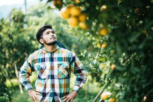 Homem no pomar observando fertilizantes e agrotóxicos