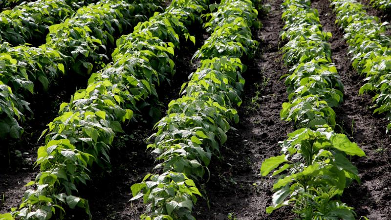 As-5-melhores-práticas-para-o-cultivo-de-grãos