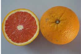 laranja Cara Cara